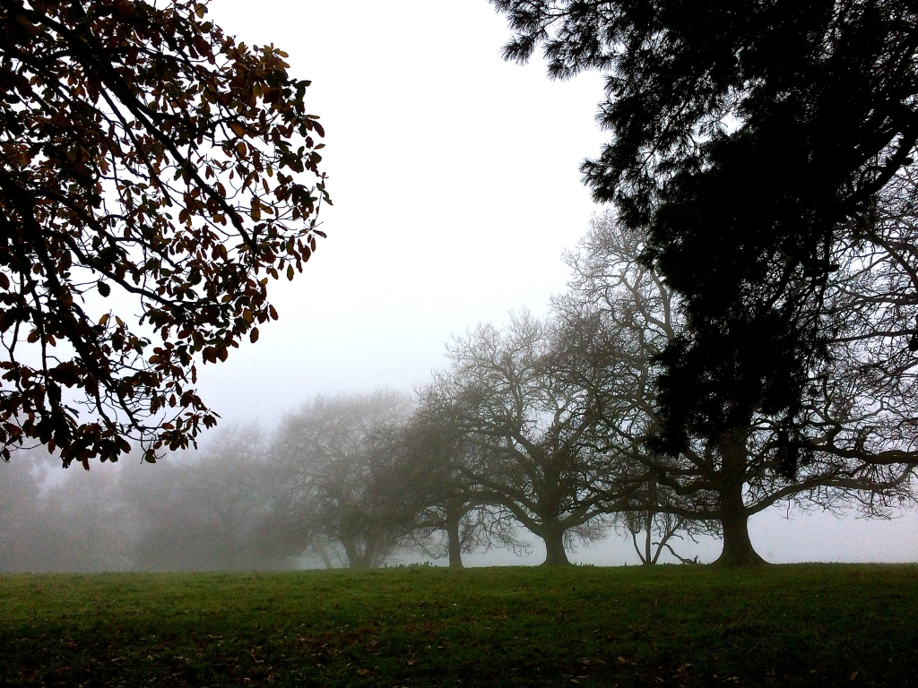 July 22 fog Melbourne