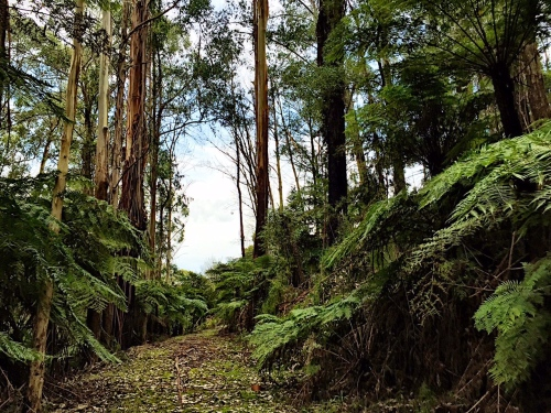 Mount Dandenong trails